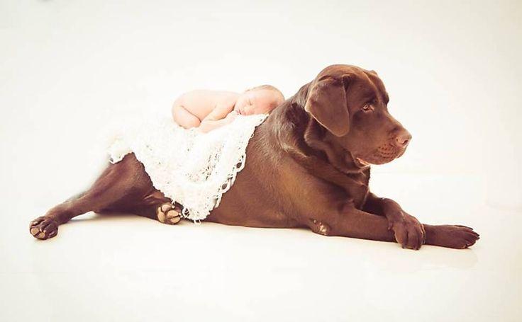 F5 - bichos - Cães rejeitam pessoas que são hostis com seus donos, diz estudo - 13/06/2015