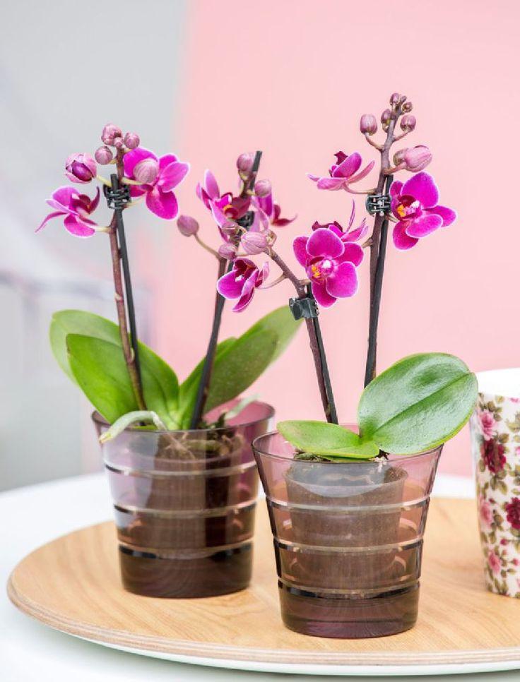 adelaparvu.com despre schimbarea ghiveciului la orhidee, Foto Floradania (1)