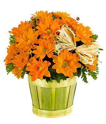 Fall Daisy basket $34.99 www.SevenSistersFlorist.com