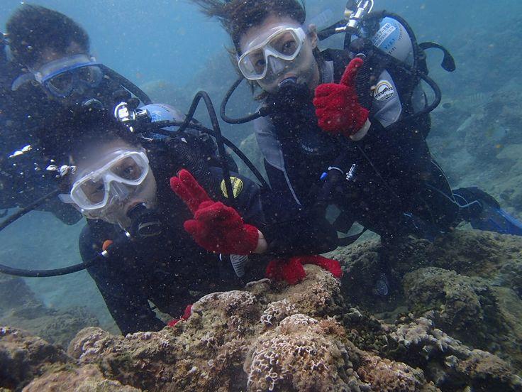 不思議な海の生き物のオンパレード! - http://www.natural-blue.net/blog/info_2774.html