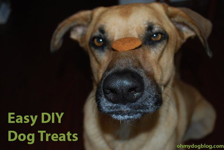 Easy DIY Dog Treats | OhMyDogBlog.com
