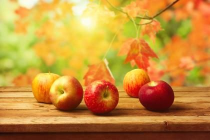 Autumn apples - (#98849) - High Quality and Resolution Wallpapers on hqWallbase.com
