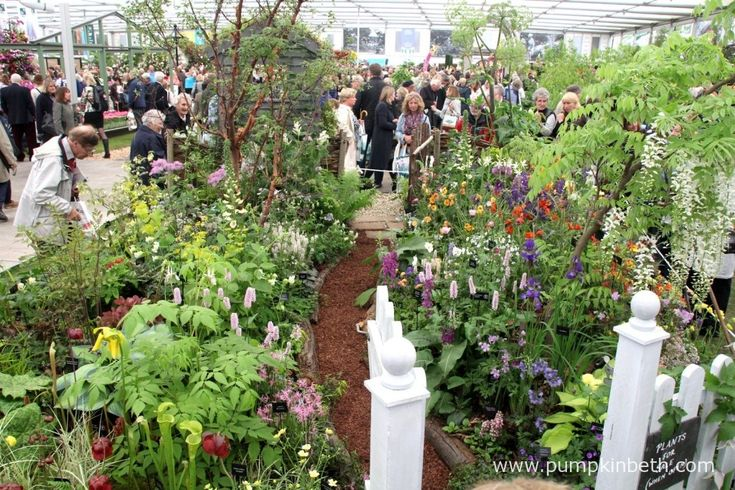 Kent Hardy Plant Society's beautiful exhibit in the Floral Marquee at the 2015 RHS Chelsea Flower Show.