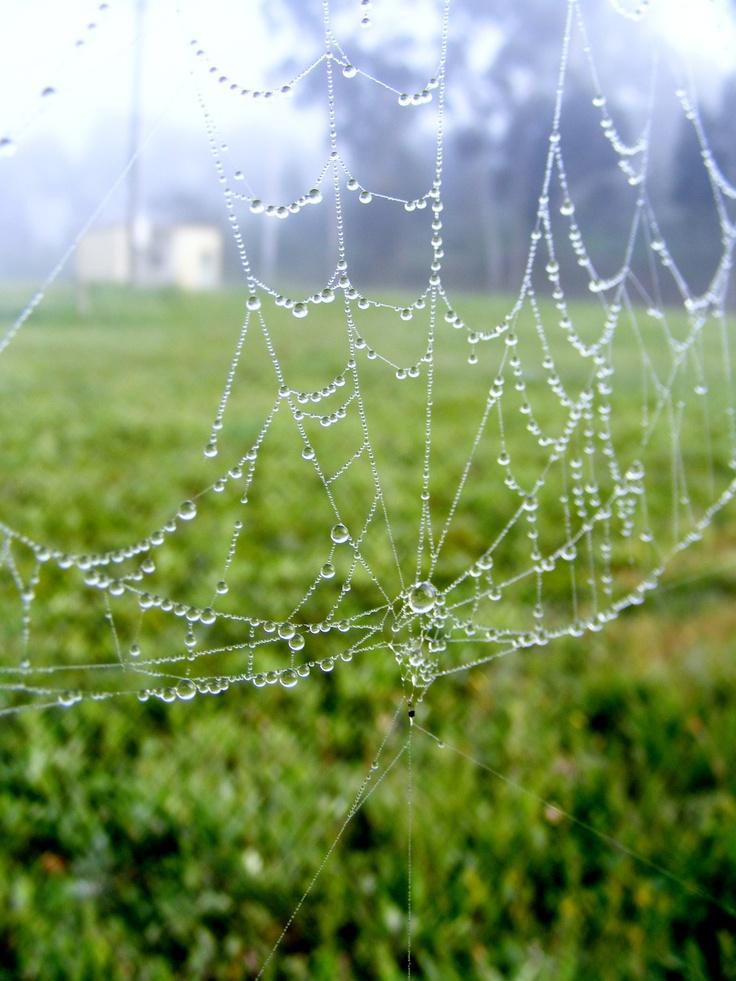 Little Spider Web