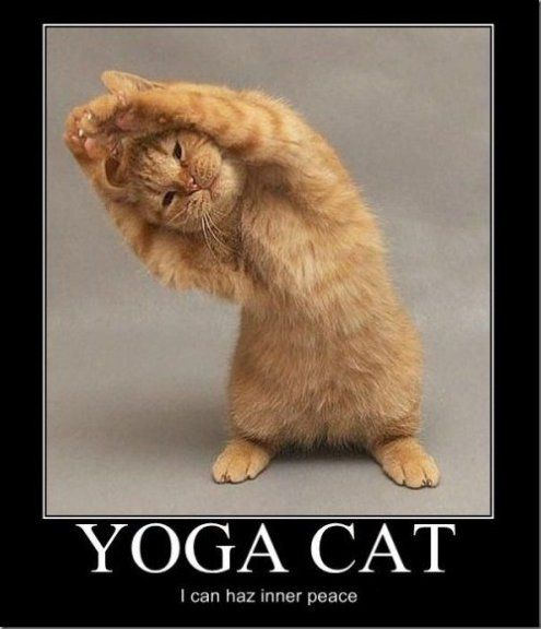LOL - Yoga Cat - www.funny-pictures-blog.com - haha love him!!