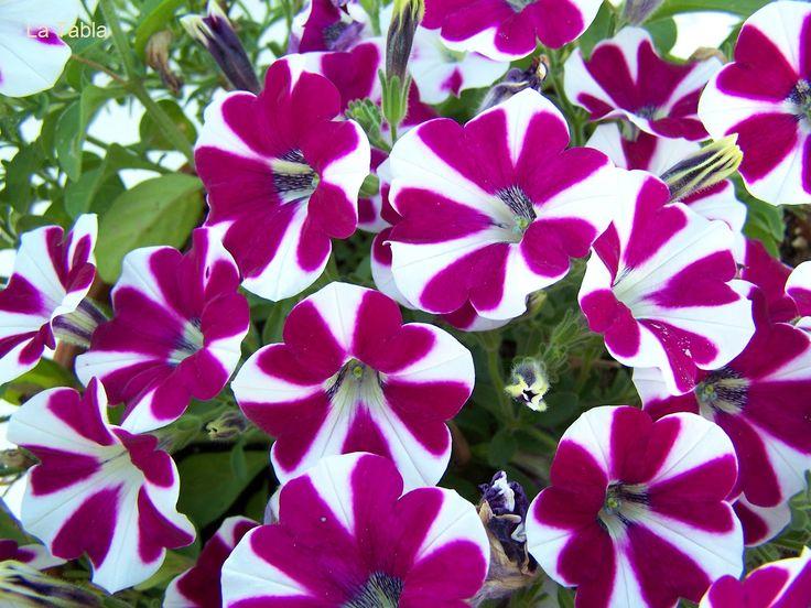 1000 images about plantas on pinterest flower blue - Plantas de exterior ...