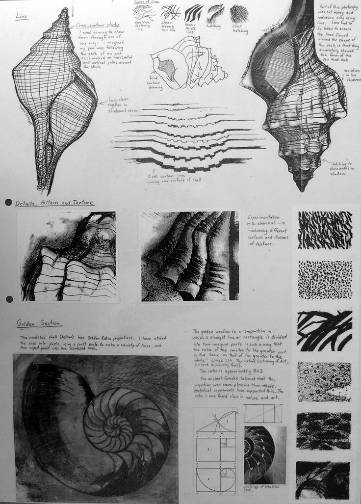 Observational study for an International GCSE Art project - A comprehensive sketchbook page based on the natural forms of shells. In addition to trialling a range of media and drawing techniques, students looked more closely at texture. Charcoal drawings of textured surfaces, as well as an etching of a nautilus shell (with notes about the Golden Section) are included.