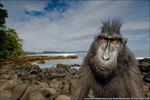 Die Schönsten Hintergrundbilder Der Welt Von Tieren