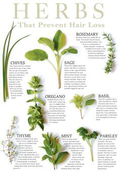 Herbs That Prevent Hair Loss: Rosemary is a powerful herb for hair growth.also stimulates new hair growth, detoxifies scalp and restores hair pigmentation.