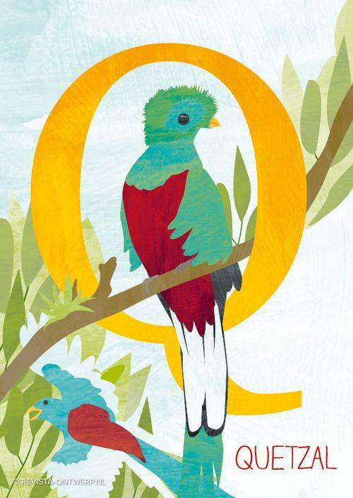 De Q is van quetzal, een prachtige vogel uit Midden-Amerika. Onderdeel van het dieren ABC voor kinderen. www.revista-ontwerp.nl
