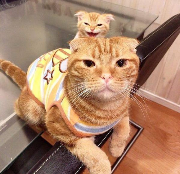21 Of The Best Orange Tabby Cats You Will See Today Funny Animal