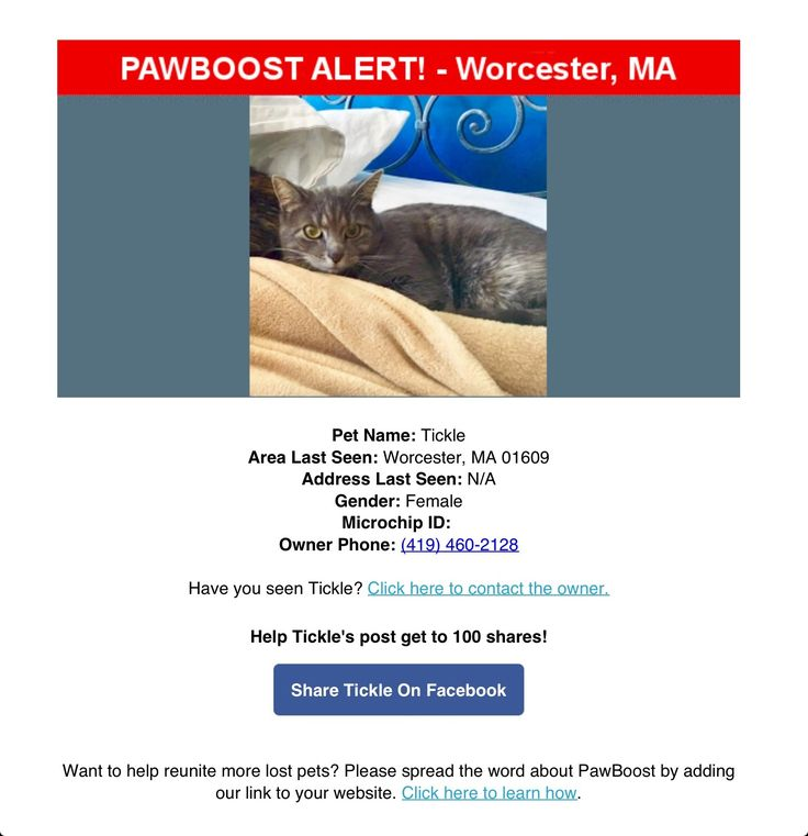 Lost Female Cat Named Tickle: Worcester, MA