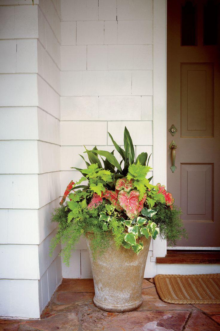 Best 20 front door planters ideas on pinterest front for Potted plants by front door