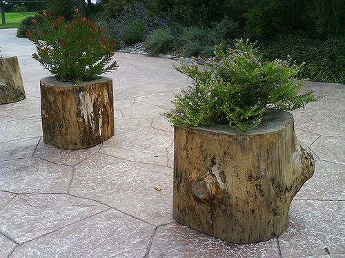 Tree stump planters, already have the hollow stump, now I need a saw to cut it in half because it is so tall.