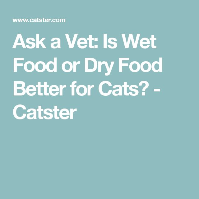 Ask a Vet: Is Wet Food or Dry Food Better for Cats? - Catster
