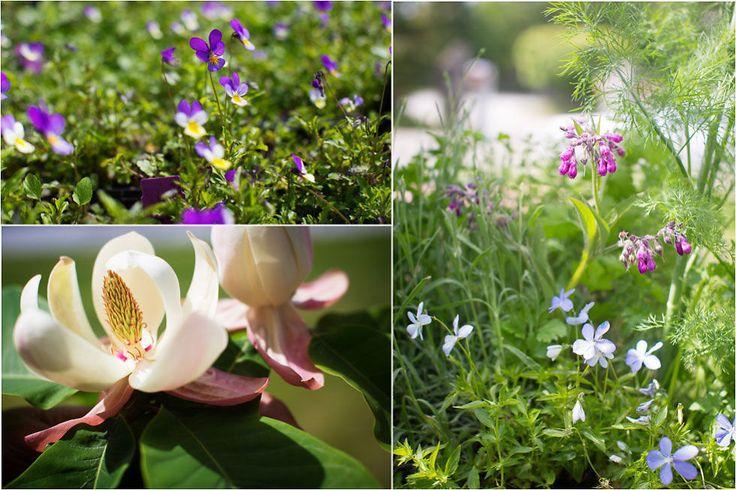 Her er blomstene du kan spise - Godt.no - Finn noe godt å spise