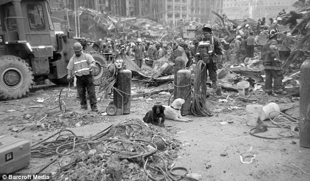 Scout and another unknown dog lie among the rubble at Ground Zero, just two of nearly 100 search and rescue animals who helped to search for survivors.