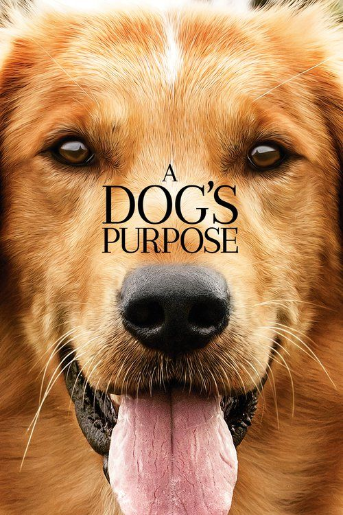 Watch A Dog's Purpose (2017) Full Movie Streaming HD | A Dog's Purpose (2017) Full Movie download | A Dog's Purpose Full Movie in hindi | A Dog's Purpose Full Movie free streaming | A Dog's Purpose Full Movie download in hindi | A Dog's Purpose Full Movie online free #movies #film #tvshow