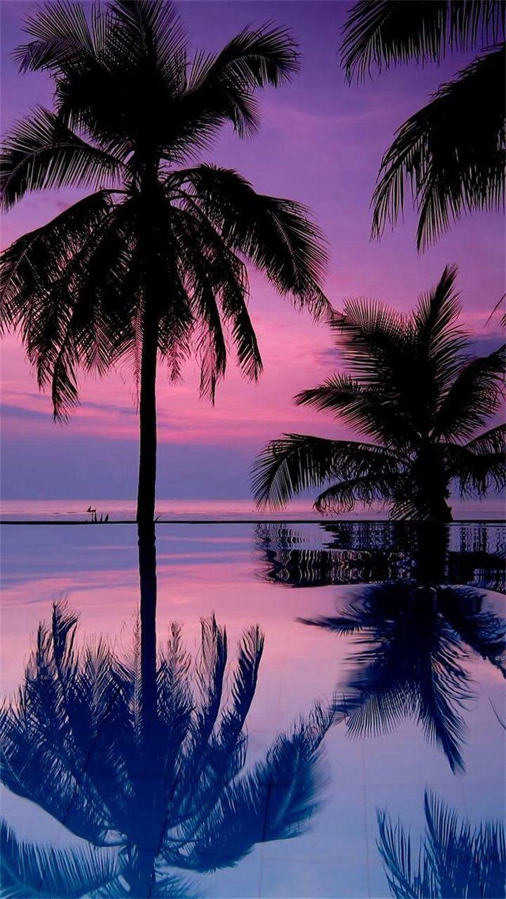 Pin On Rayssananica Sunset Wallpaper Palm Trees Wallpaper Tree Wallpaper Hd wallpaper summerpalm tree sky sun