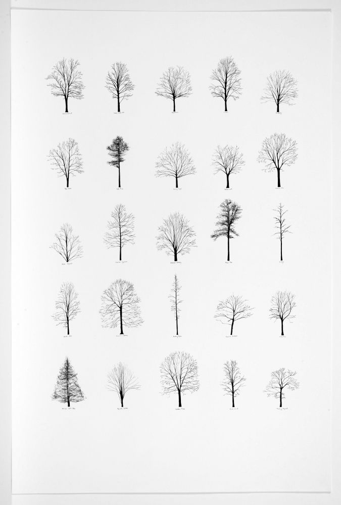 katie holten trees of the usa architecture times - Architecture Drawing Of Trees