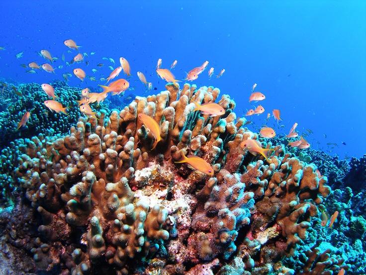 沖縄の水中世界