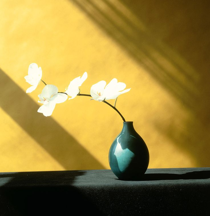 Flora, Les Fleurs de Mapplethorpe aux éditions Phaidon - L'Œil de la photographie