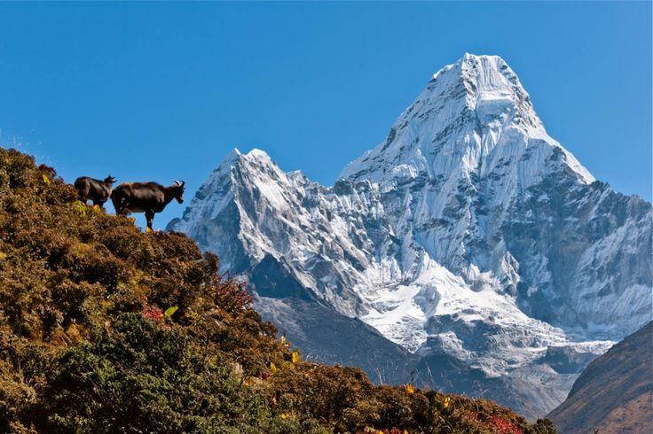 Take a Hike: Everest Base Camp Trek, Nepal