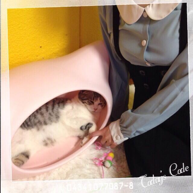 Twitter / suzakinishi: ぺと猫カフェ来たヽ(^ω^)ノ! ぺがずっと「あっちゃん、あっちゃん」って呼びながら猫を触ってる(´・ω・*) てかどの猫にもあっちゃんって呼んでるんだけど(´・ω・*)こわい… by西 #洲崎西 pic.twitter.com/keakYCy7gK