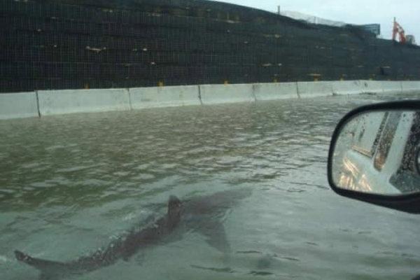 FAKE Foto falsa do tubarão nadando ao lado de um carro em uma avenida inundada em New York (Foto: Reprodução/Instagram)