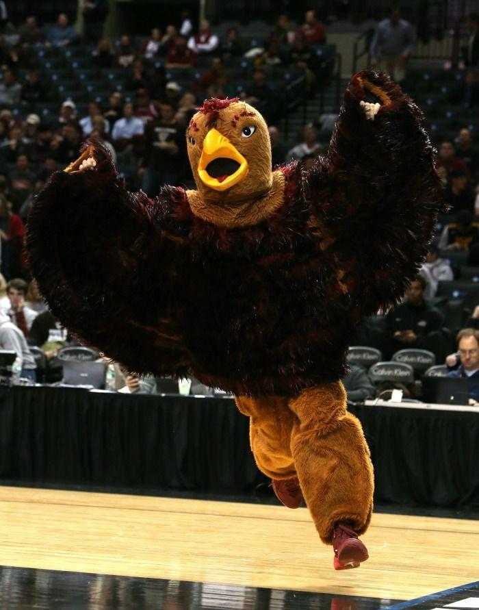 Did You Know? Saint Joseph's Hawk That Won't Stop | Surviving College