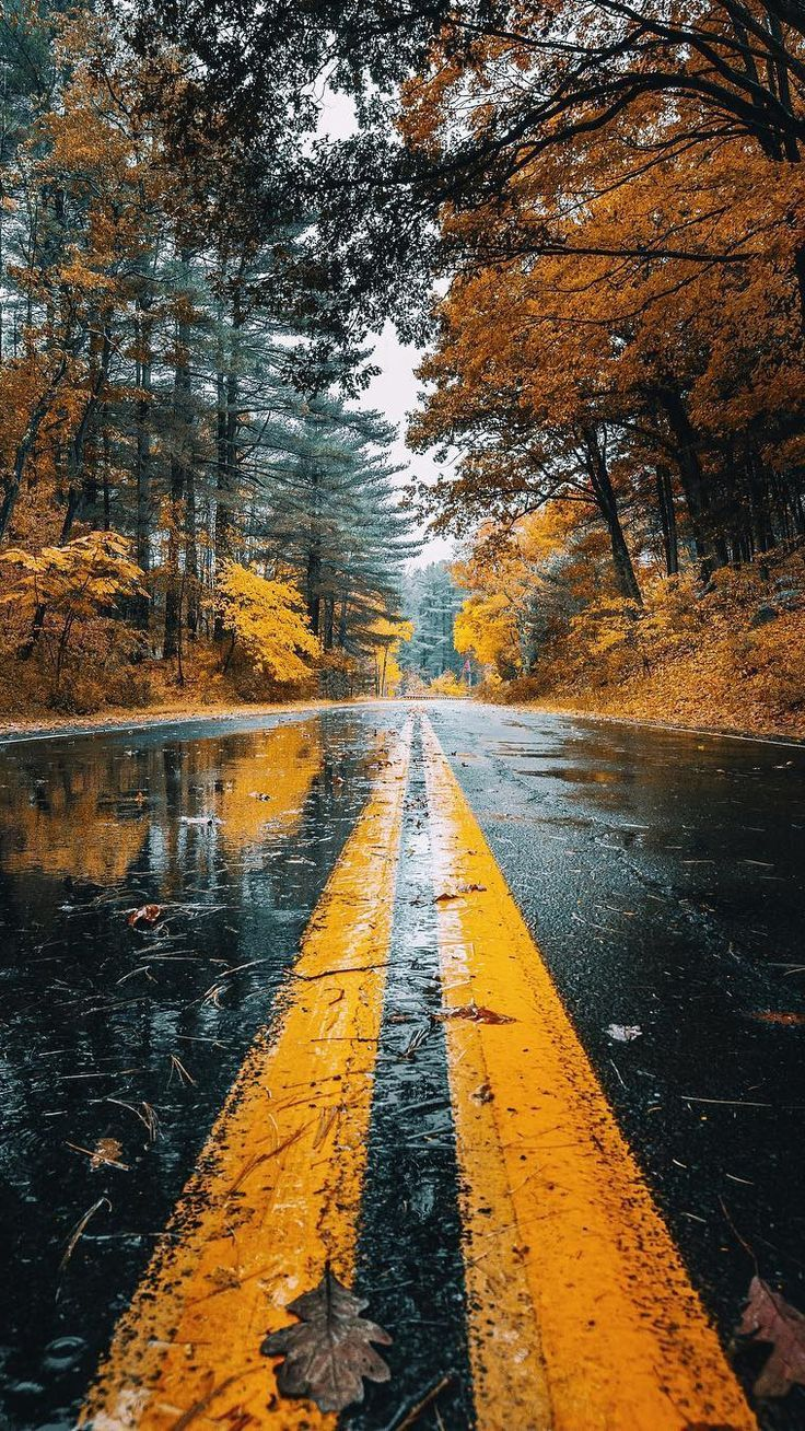 Autumn Road Rainfall Trees Android Wallpaper #nature #wallpaperideas #road