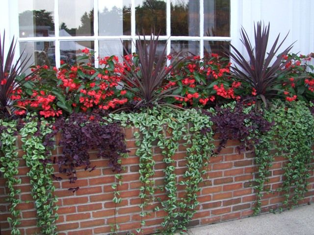love the trailing ivy