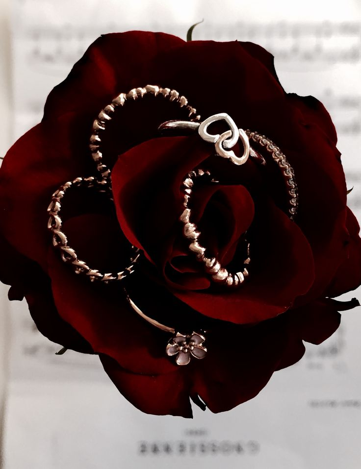 Best surprise ever - one single red #rose with beautiful #PANDORAring   www.goldcasters.com