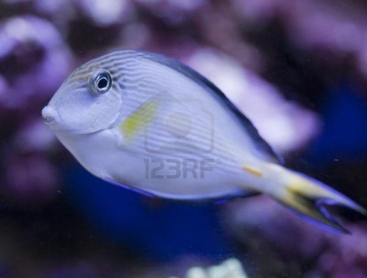 Diy Aquarium Light Reflector Woodworking Projects Amp Plans
