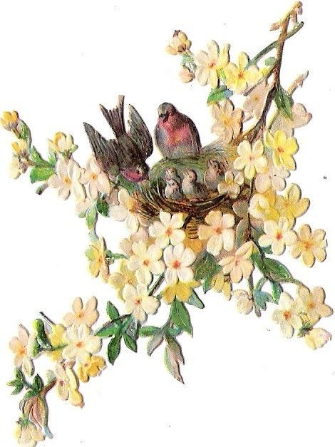 Oblaten Glanzbild scrap die cut chromo Vogel bird  Nest  Küken  Ast branch chick