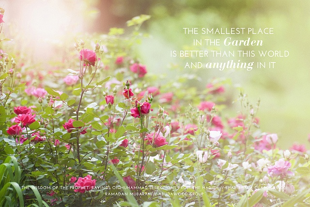 (Ramadan Card ~ Garden)  Share these inspirational greetings with your family, friends and colleagues.  www.abudawoodglobal.com
