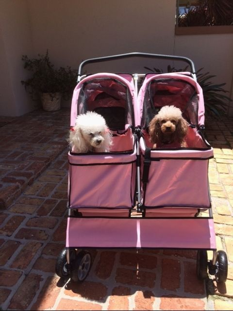 Poodle Party Palm Beach style