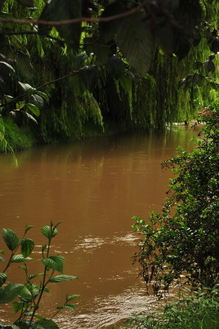 Este cauce ha recibido durante 60 años las aguas residuales de la ciudad. Es hora de hacer algo para rescatarlo. #AdoptaUnArbol
