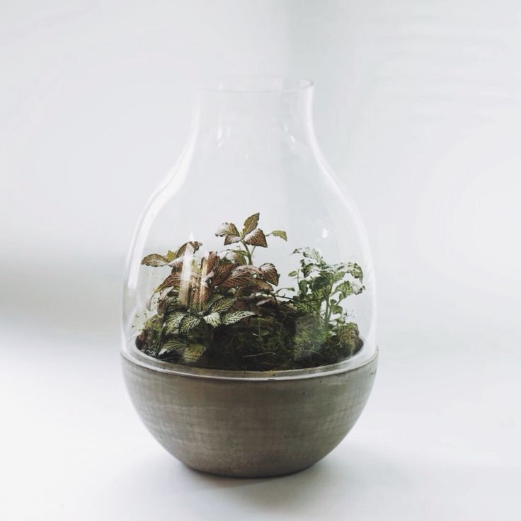 Another terrarium of design by Agacsakal #terrarium #diy #flower #glass #design #concrete #fittonia