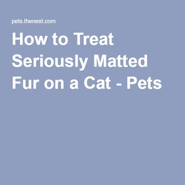 How to Treat Seriously Matted Fur on a Cat - Pets