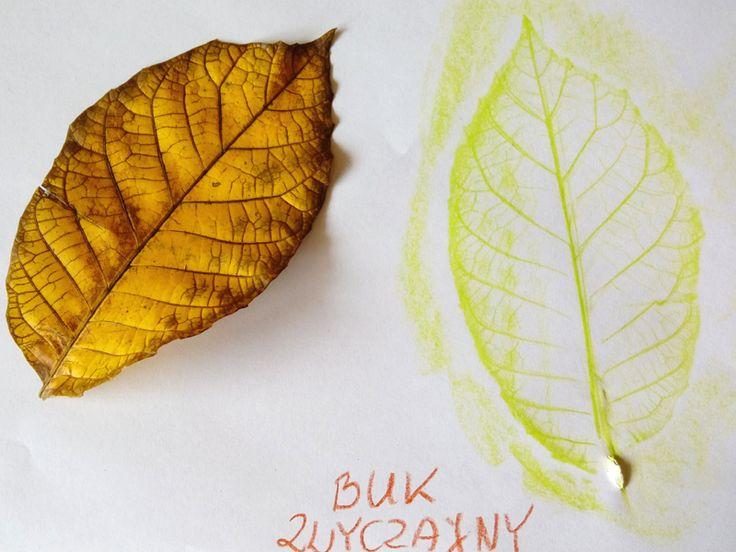 Kolorowe liście - pełen wpis na blogu od 8 października 2016
