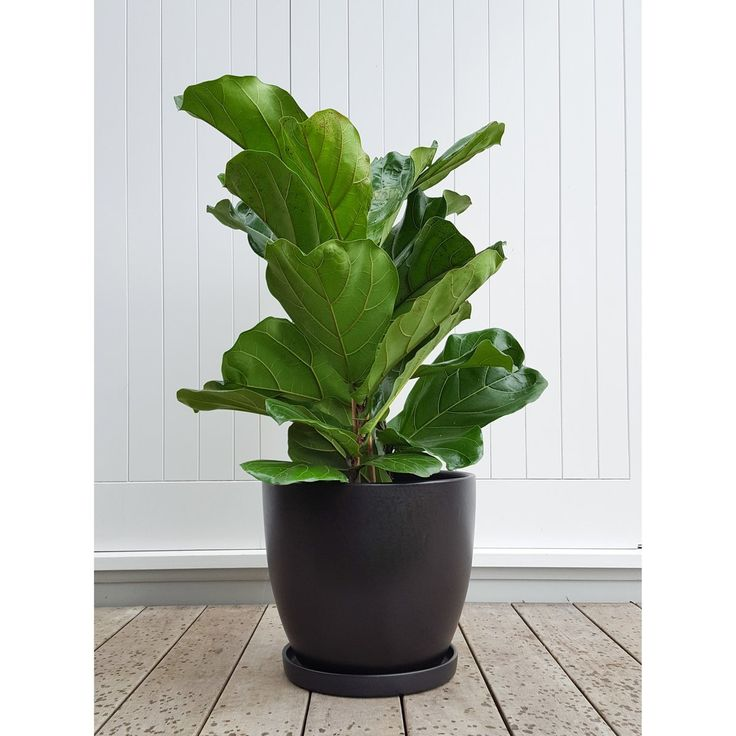 82 Best Cool Indoor Plants Images On Pinterest Cool 640 x 480