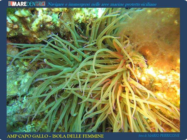 IL MARE DENTRO by ORCAsub - anemone
