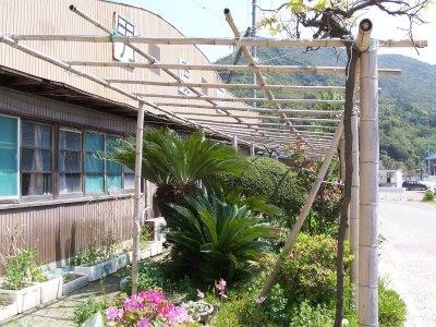 Bamboo Pergola Pictures
