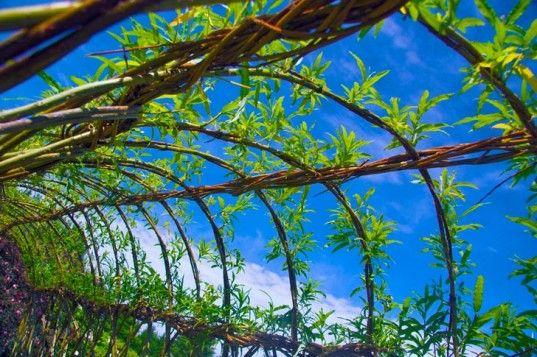 willow dome, bio-architecture, living structure, living dome, permaculture, bio-dome, eco-architecture