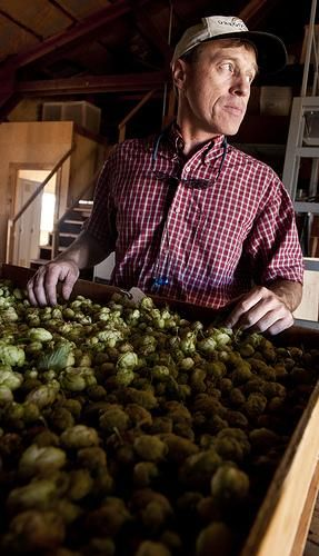 Tips for growing your own hops in your backyard for home brewing.  #craftbeer