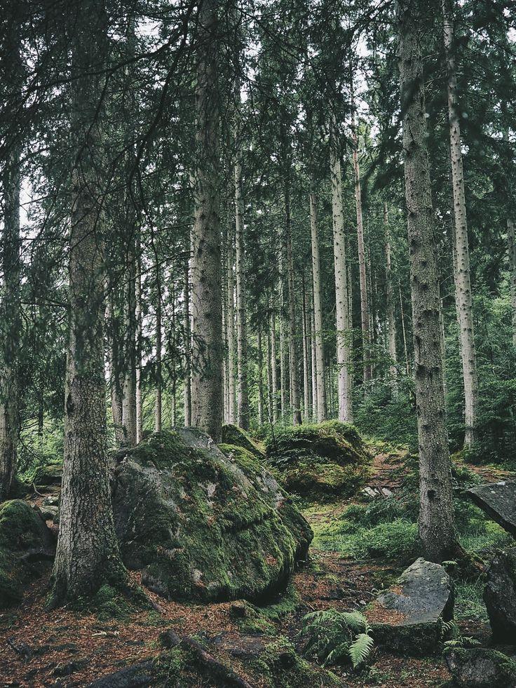 Woodland Walk Hermitage Forest
