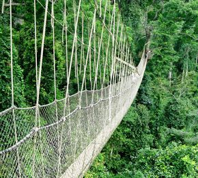 The 10 Most Terrifying Rope Bridges Around the World : Kakum National Park Canopy Walkway : Ghana