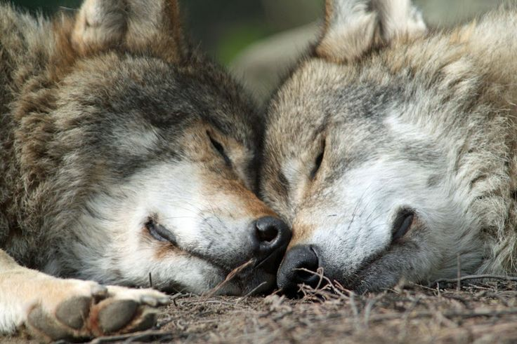 In Lak'ech, I Am You/You Are Me -You are my other me.  If I do harm to you,  I do harm to myself.  If I love & respect you,  I love & respect myself.   ~Mayan Inspired Poetry ~Wolf Quotes~
