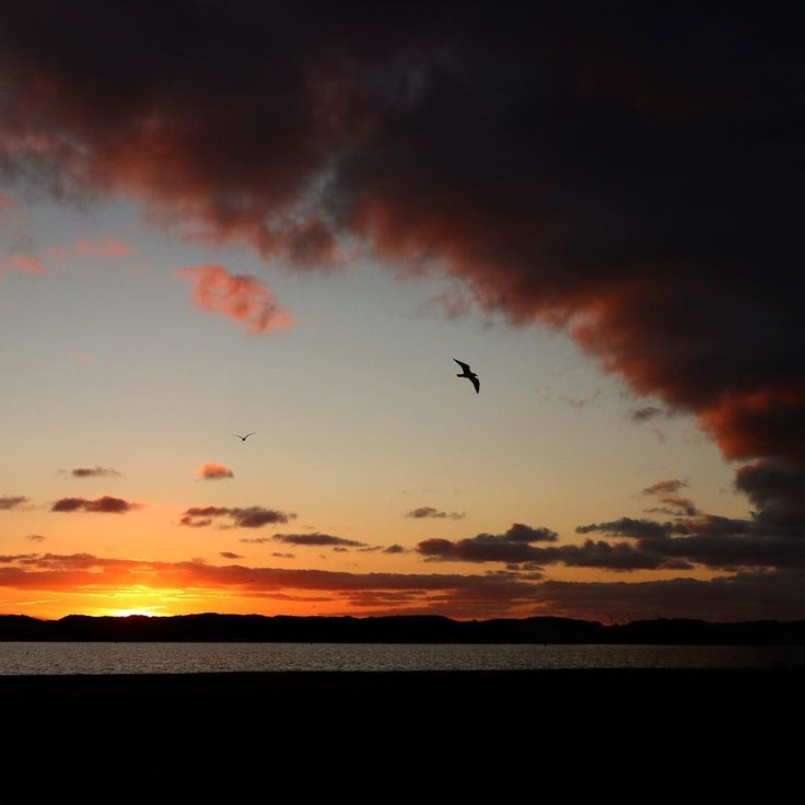 #liverpool #waterloo #sunset #seagull #england #nature